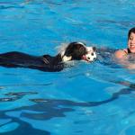 girl teaching a dog to swim